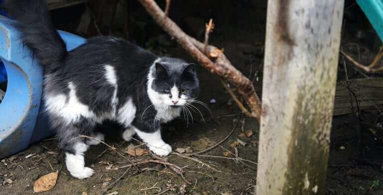BC SPCA 125 Cat
