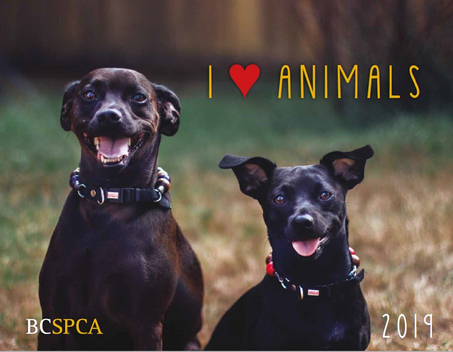 Two black dogs on the cover of the 2019 BC SPCA calendar