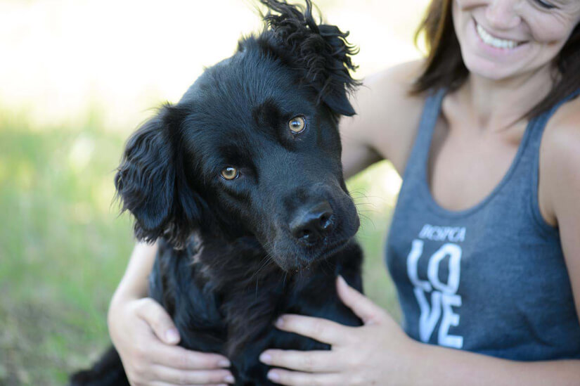 BC SPCA 125 Dog
