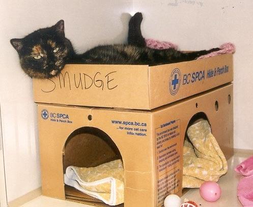 tara the cat dog euthanized