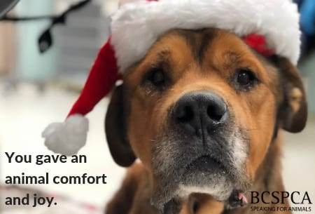 In Honour - Comfort and Joy - Betsy