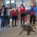 Responsible wildlife tourism