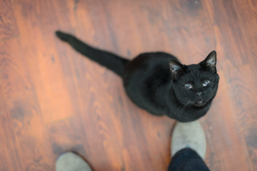 A black cat stares up at a human while standing at their feet.