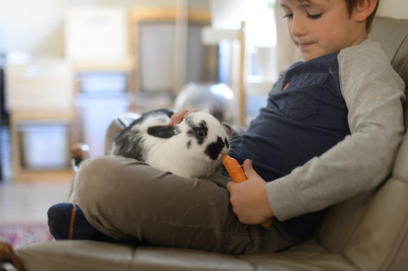 A child feeds a rabbit a carrot as they both sit on a couch