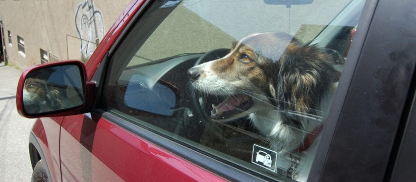 Why you shouldn't break the glass of a hot vehicle if a dog
