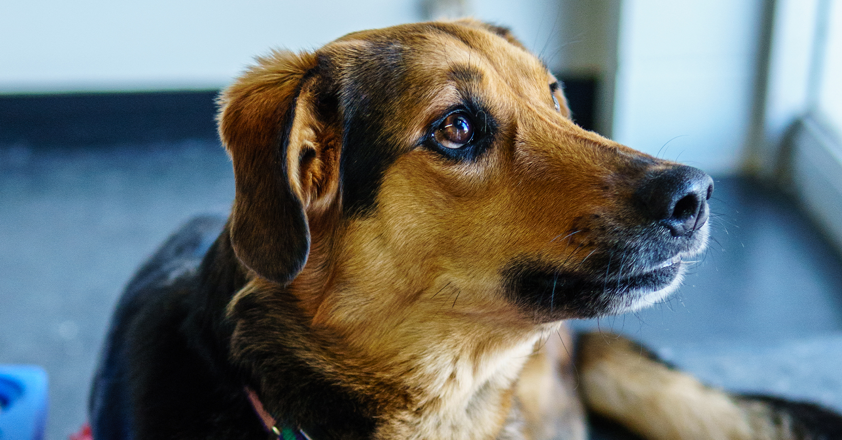 dog indoors looking up