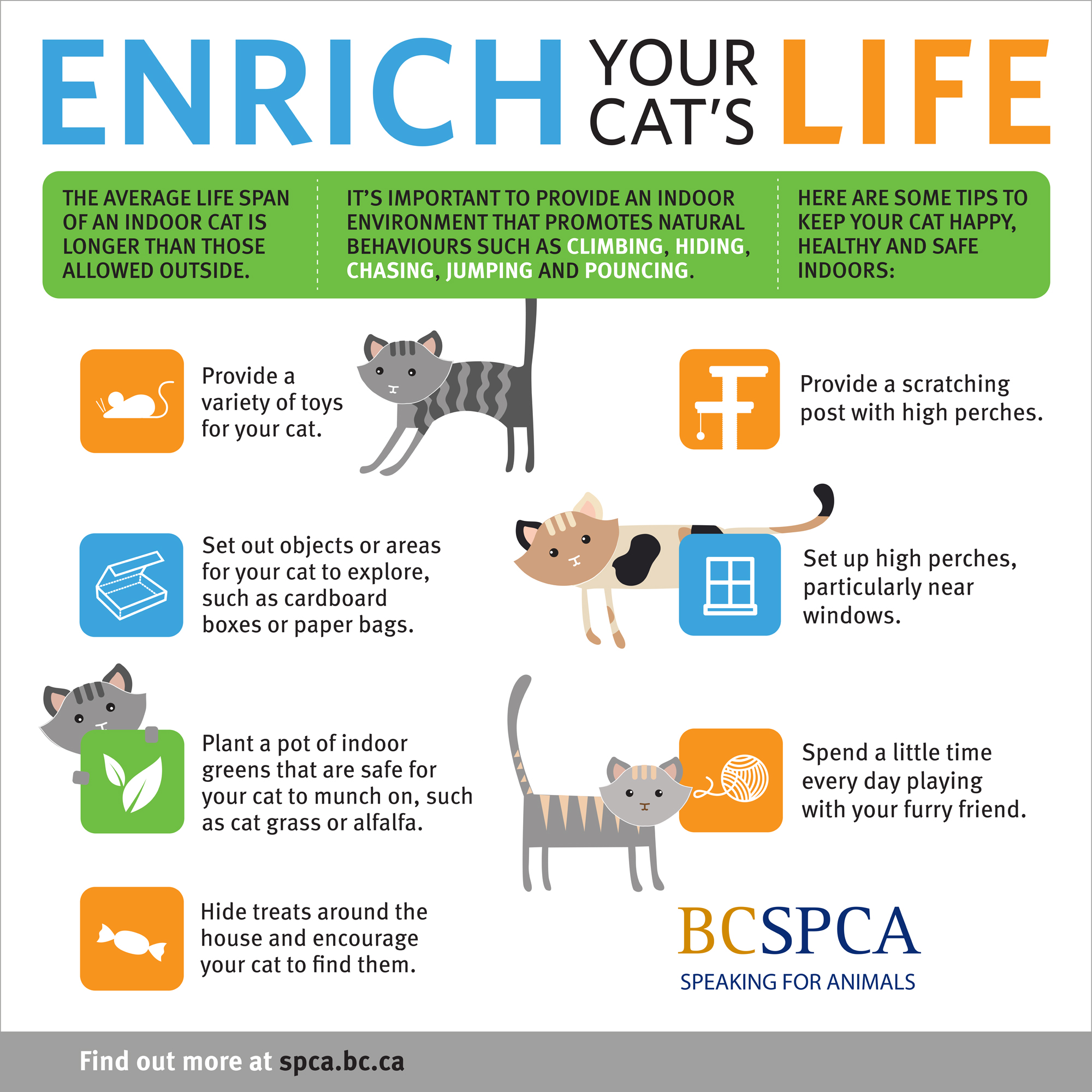 Bc Spca Cats For Adoption