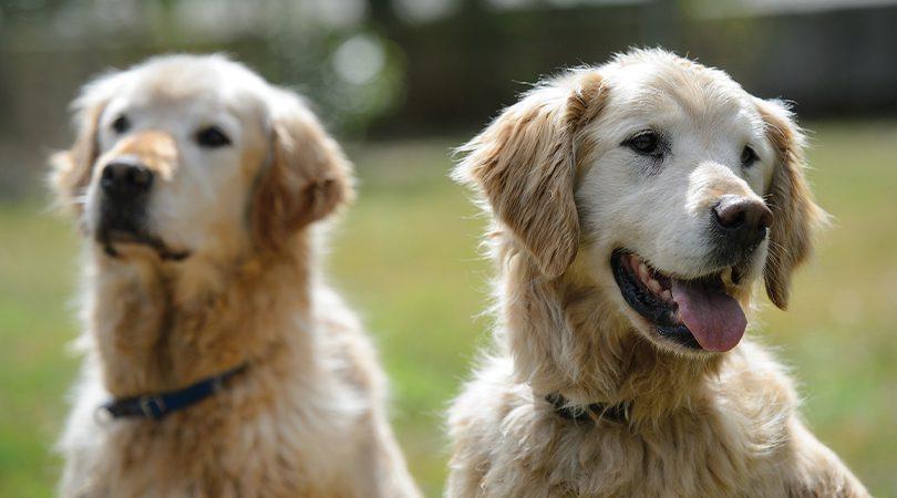 BC SPCA AnimalKind Dog training