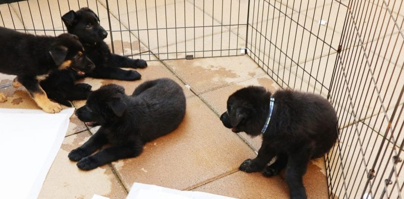 hope in homes creating pet friendly housing in b c bc spca