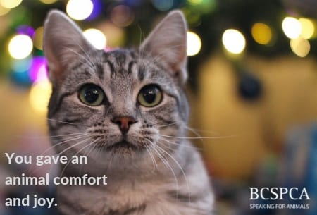 In Honour - Comfort and Joy - Hoppy Holidays