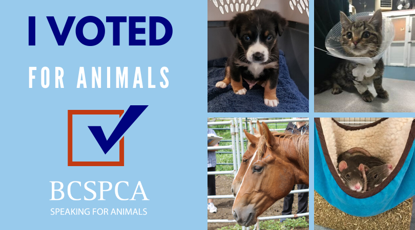 I voted for animals