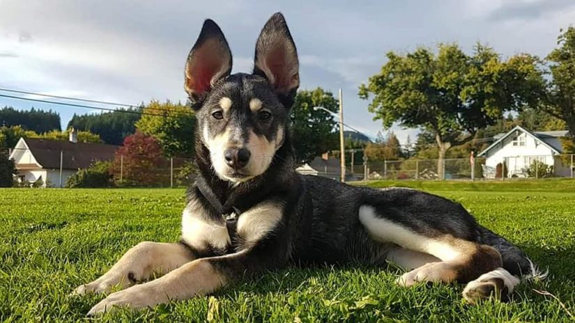Nyra poses for the camera at a park close to her home