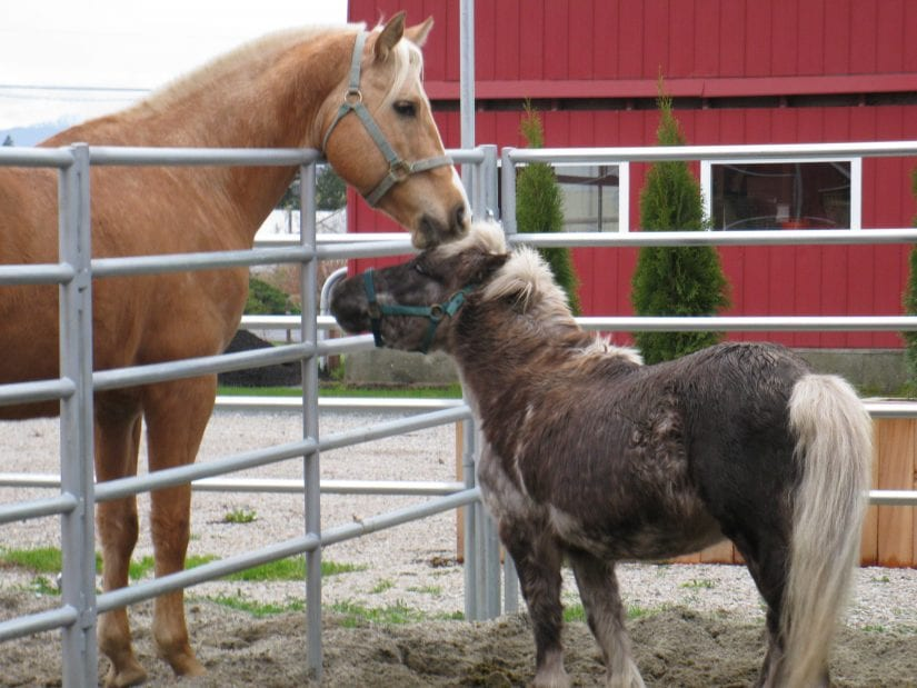 horse and pony outside at barn
