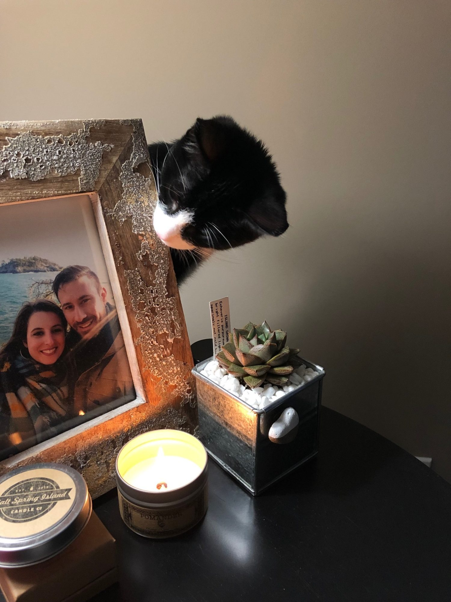 Howard the tuxedo kitten takes a look at a photo of his guardians.