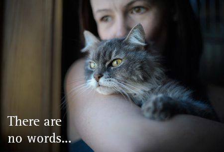 In Memory Cat ecard