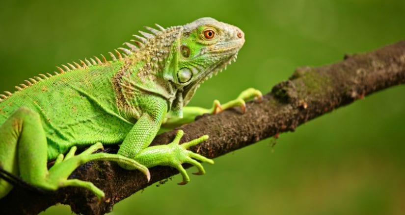 Exotic pet laws in B C