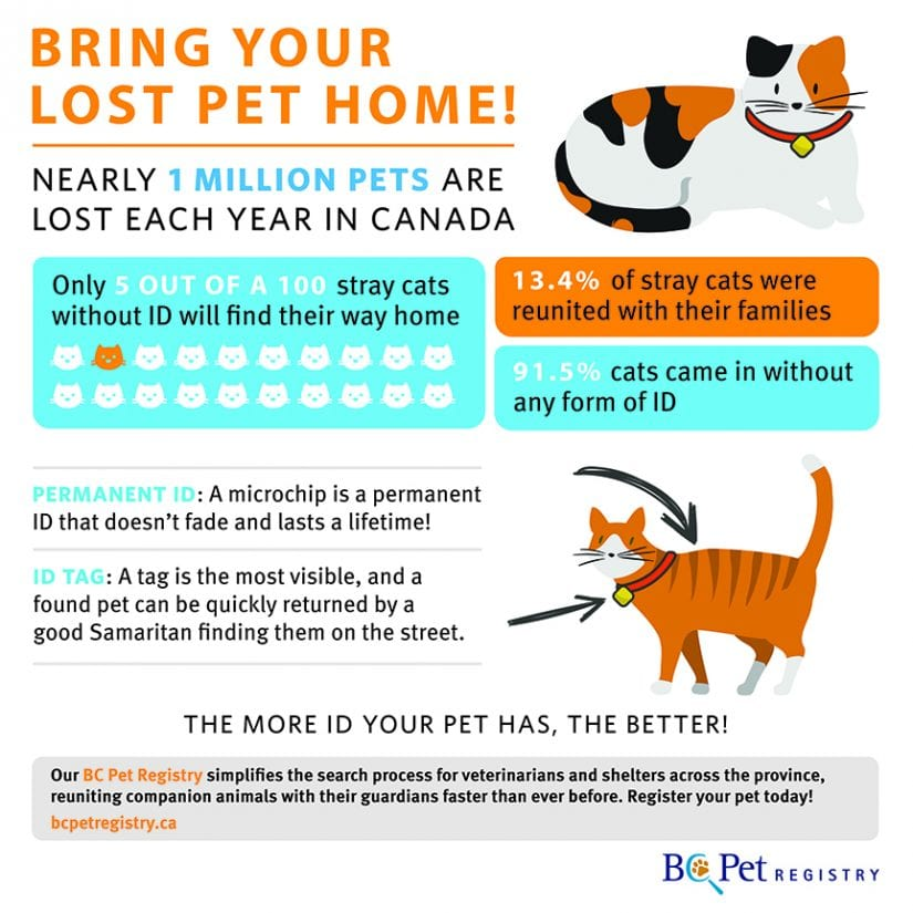 Pet ID Infographic
