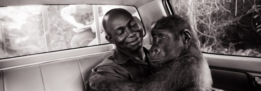 Photo taken by Jo-Anne McArthur shows a rescued gorilla with her caretaker.