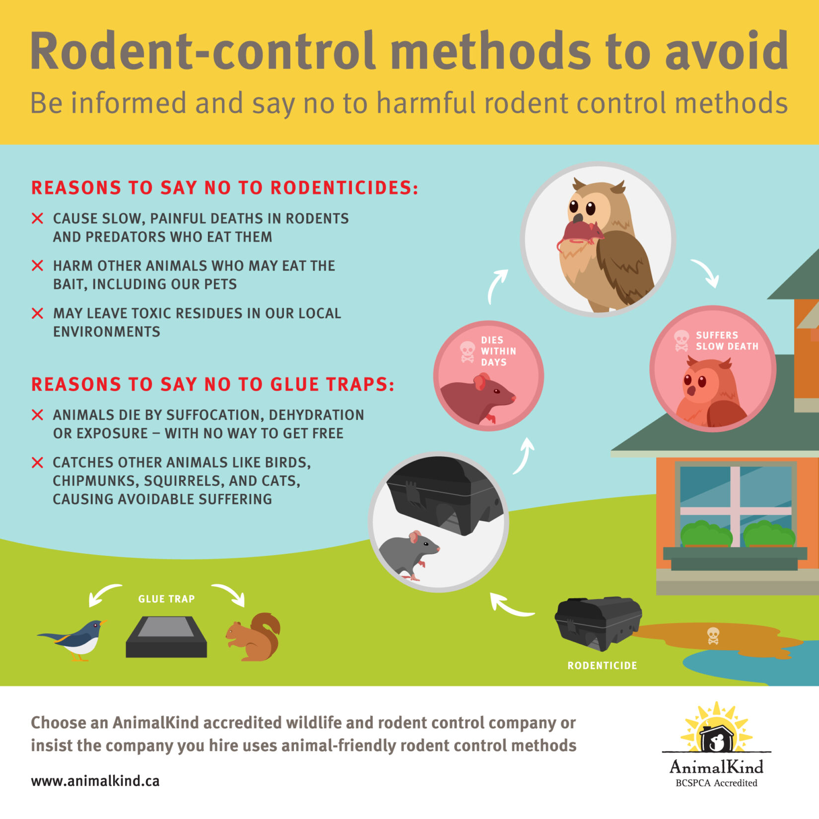 Rodent control methods to avoid
