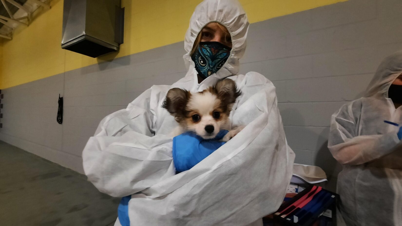 Seized puppy being help by staff in PPE- intake
