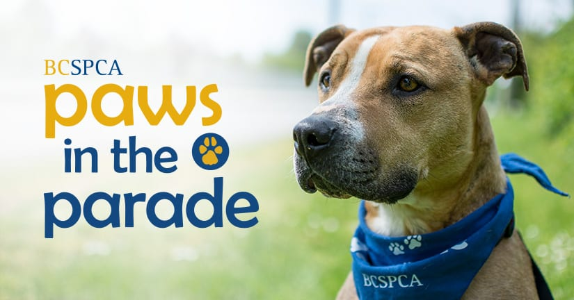 Shuswap Paws in the Parade 2018