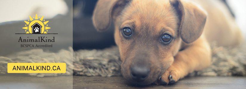 Animalkind dog training
