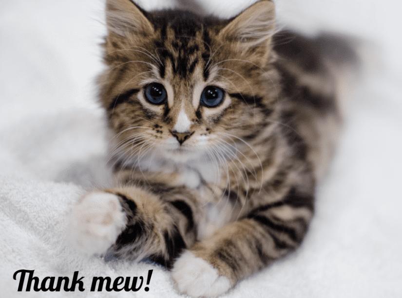 Thank Mew Kitten
