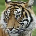 Animals in zoos, aquariums, circuses and entertainment