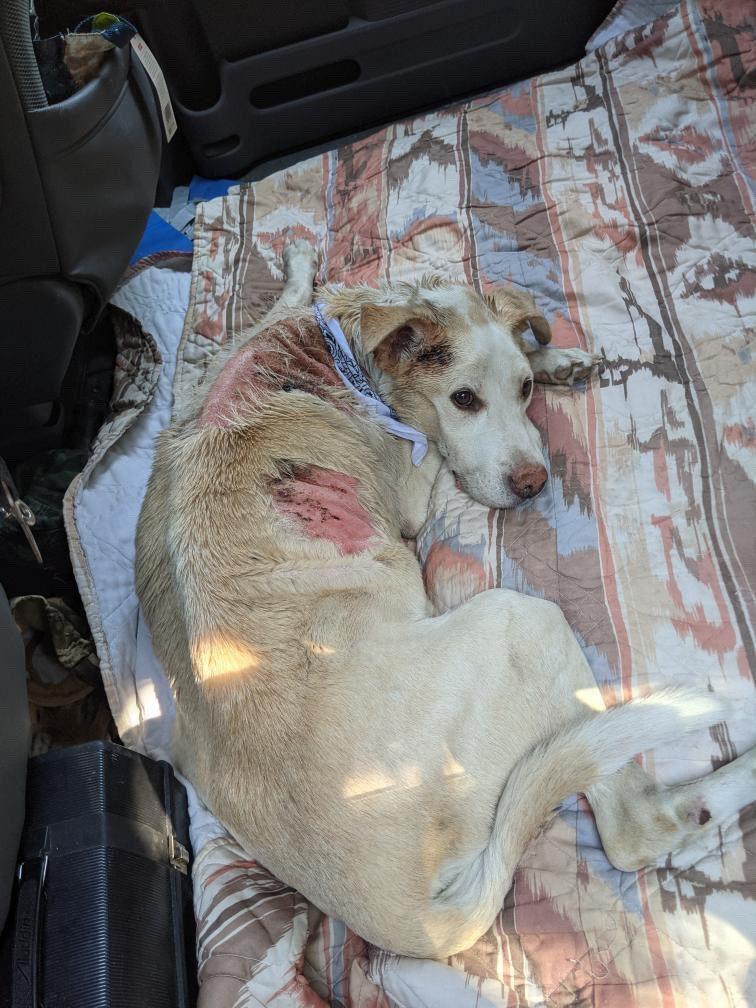 wildfire dog burn victim - Tonnerre