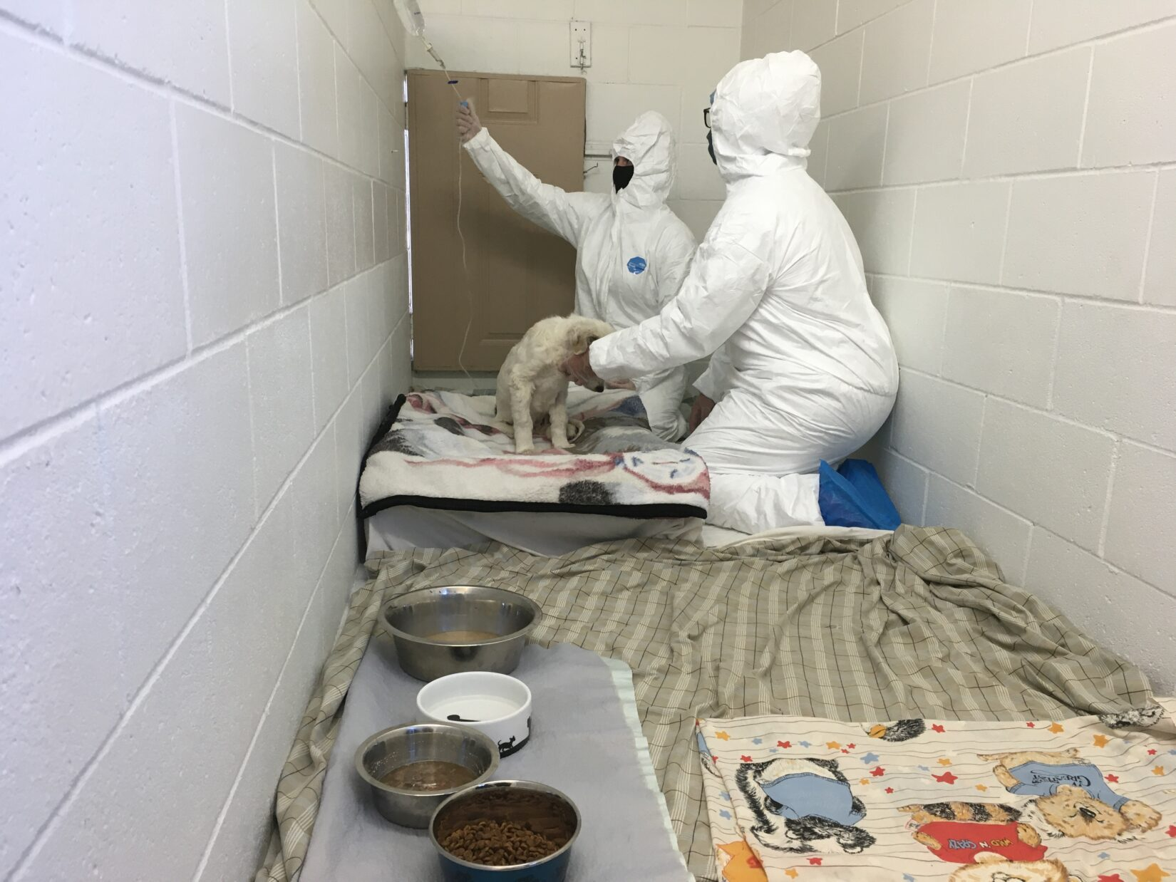 Tyvek suit being worn in kennel with parvo puppy