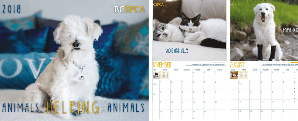Shop for SPCA certified products
