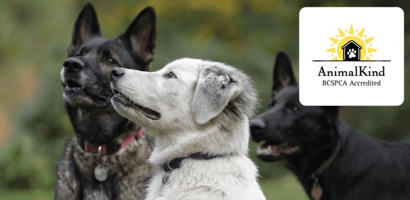 AnimalKind Dog Training banner with logo