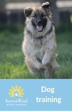 AnimalKind dog training banner