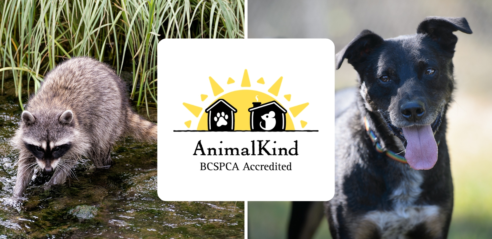 AnimalKind accreditation for wildlife control and dog training