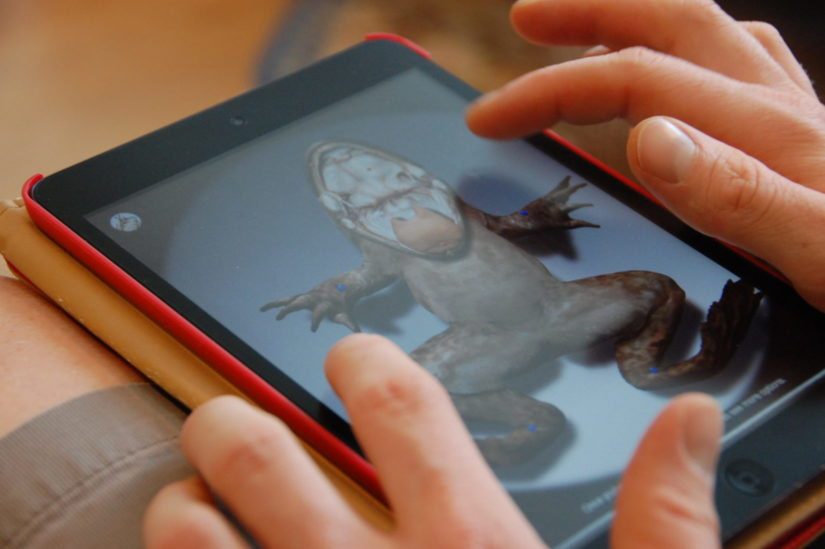 Young student using dissection app on phone