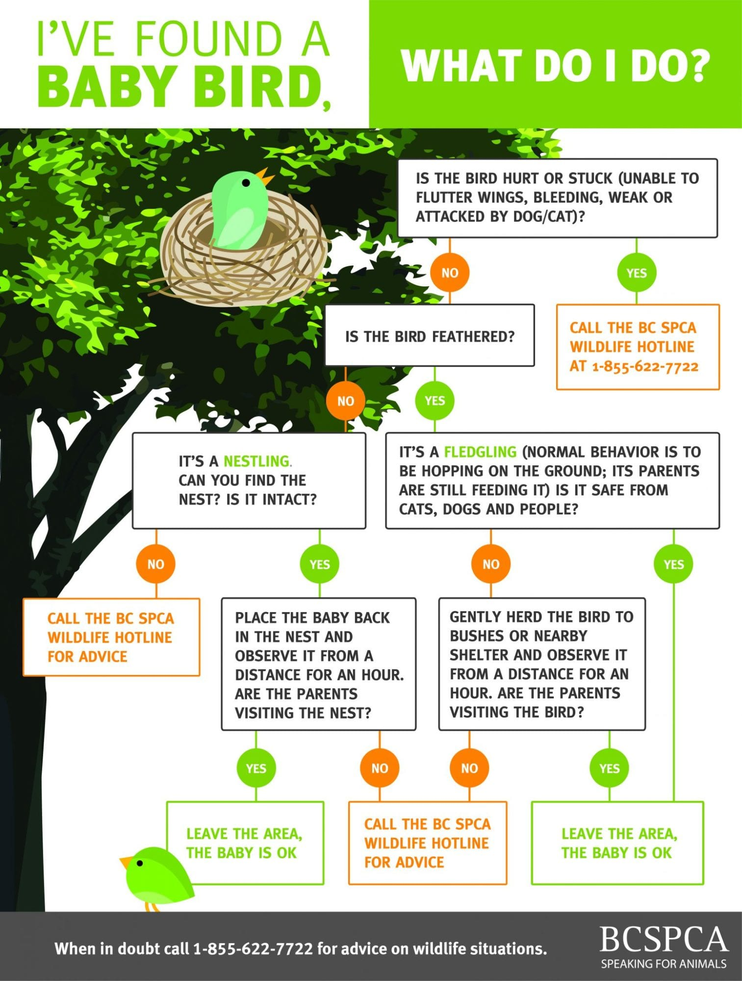 What To Do If You Found A Baby Bird