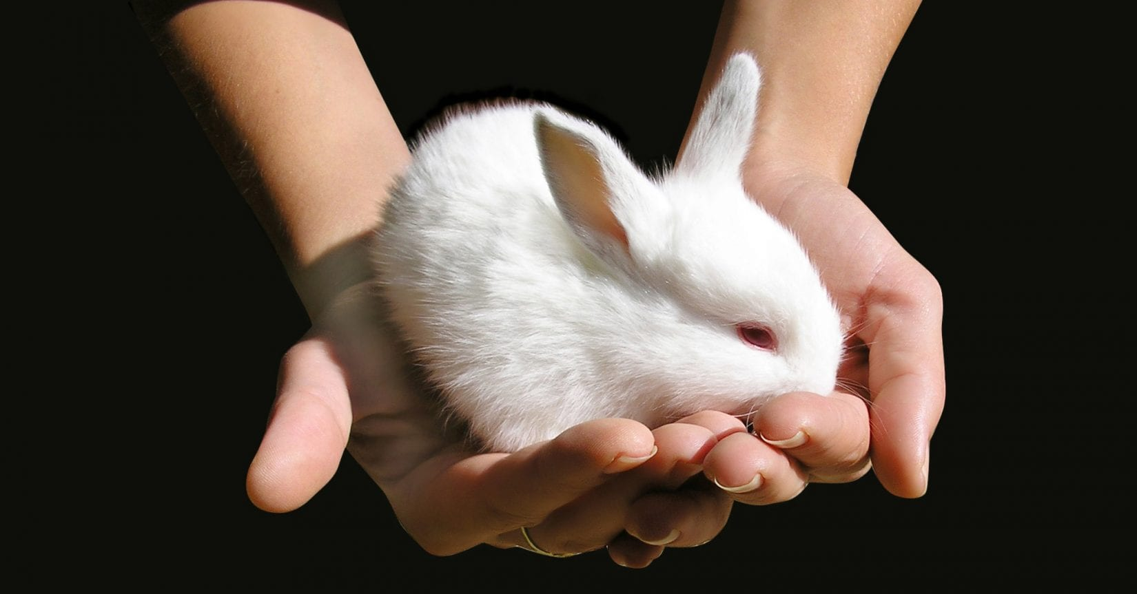 Canada to make cosmetic testing on animals illegal