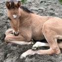 Baby horse for naming at Surrey SPCA Barn