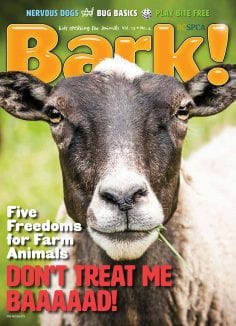 Cover of Bark! magazine