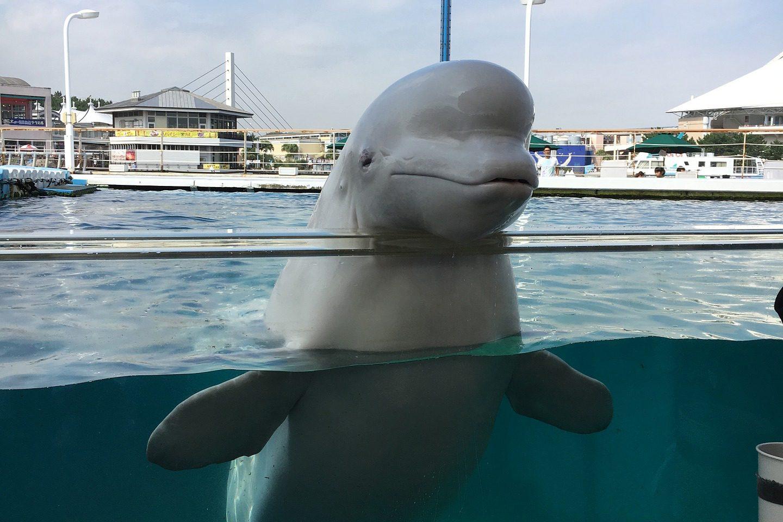 BC SPCA Beluga Cetaceans in captivity Bill S-203