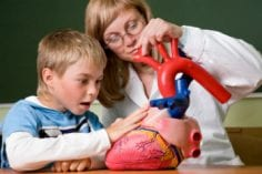 Young teacher and boy with scientific heart model