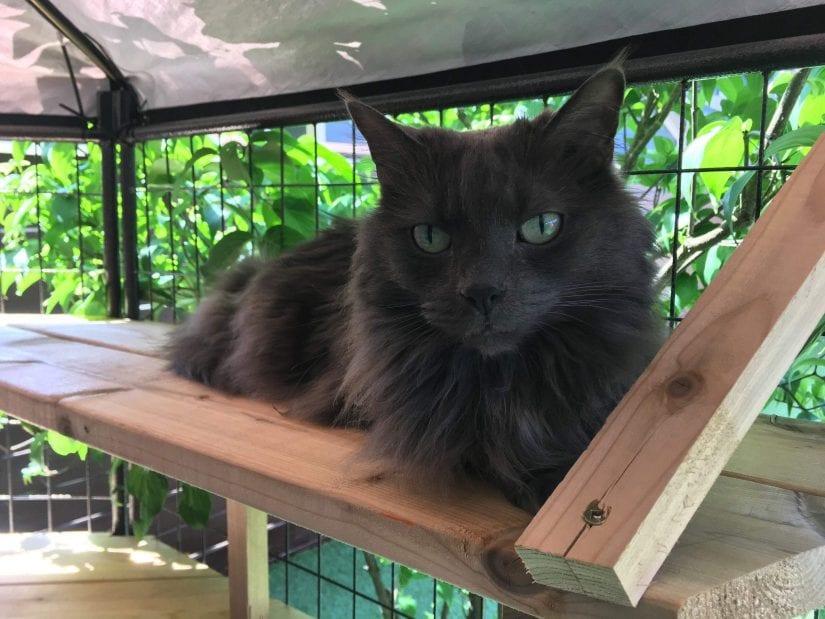 Cat in catio