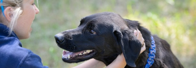 black lab smiling with person