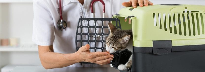 Veterinarian giving cat a treat at clinic check up