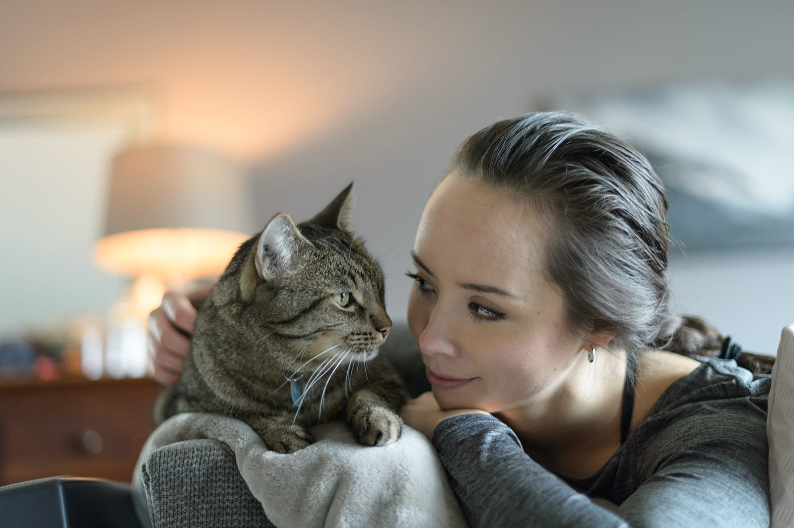 Bc Spca Adopt A Cat