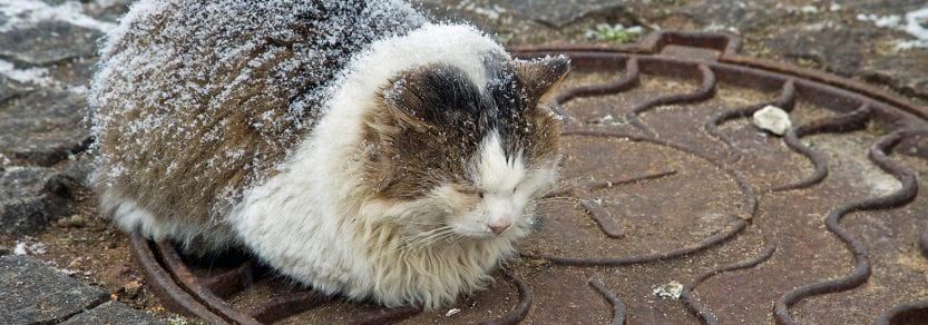 Stray cat lying on the pavement cold from the snow