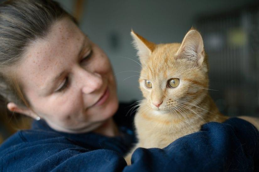 Cute wide eyed orange cat being held by smiling girl