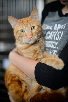Wide eye contact shot of ginger coloured cat being held by person