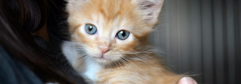 Ginger coloured kitten being held by girl looking wide eyed into the lens
