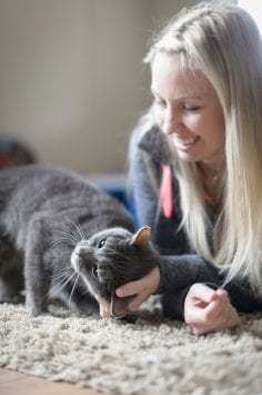Grey cat enjoying attention and pets from woman indoors